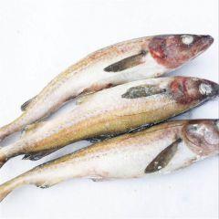 明太鱼怎么做好吃又简单