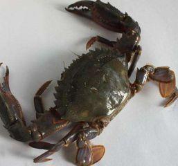 营养价值的螃蟹食谱家常做法